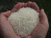 Продам рис баракат оптом и в розницу!!!