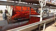 Концентрат томатной пасты
