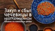 Купля и продажа чечевицы ОПТОМ и в розницу по цене ниже рыночной!!!